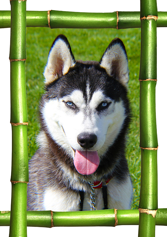 Bambo-frame-insert-pet-photo-t-shirt-#6