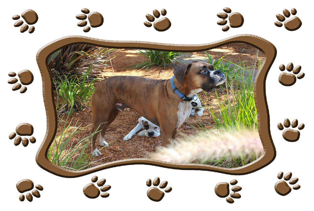 Paw-Prints-frame-sample-with-dog-picture-for-t-shirt-#8-r