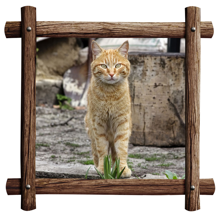 Wood-Frame-print-with-pet-photo-for-t-shirt