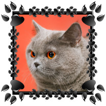 black-paws-frame-with-pet-sample-photo-for-t-shirt