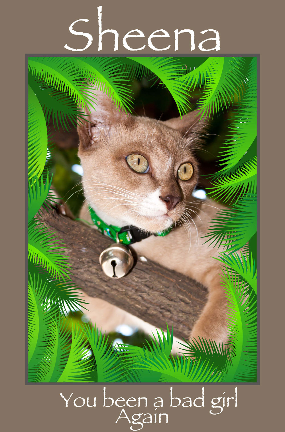 Palm-Frame-with-picture-of-pet-and-font-style-1