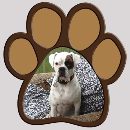 big-dogpaw-frame-insert-dog-photo-add-to-t-shirt