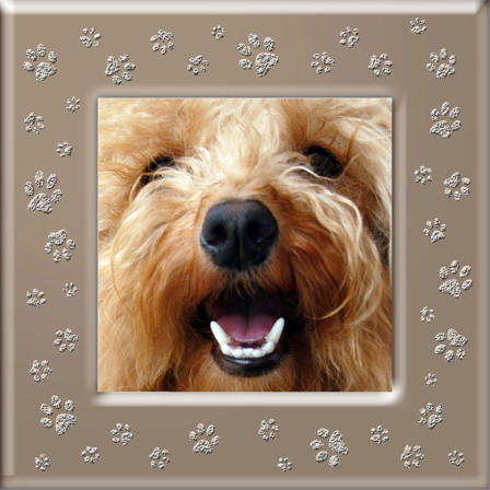tan-paws-frame-for-t-shirt-with-dog-pet-photo